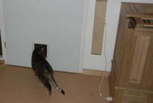 Kat vlucht door kattenluikje